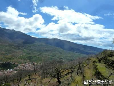 Cerezos flor Jerte; Nogaleas; rutas senderismo en madrid; mochila senderismo;sitios para visitar en